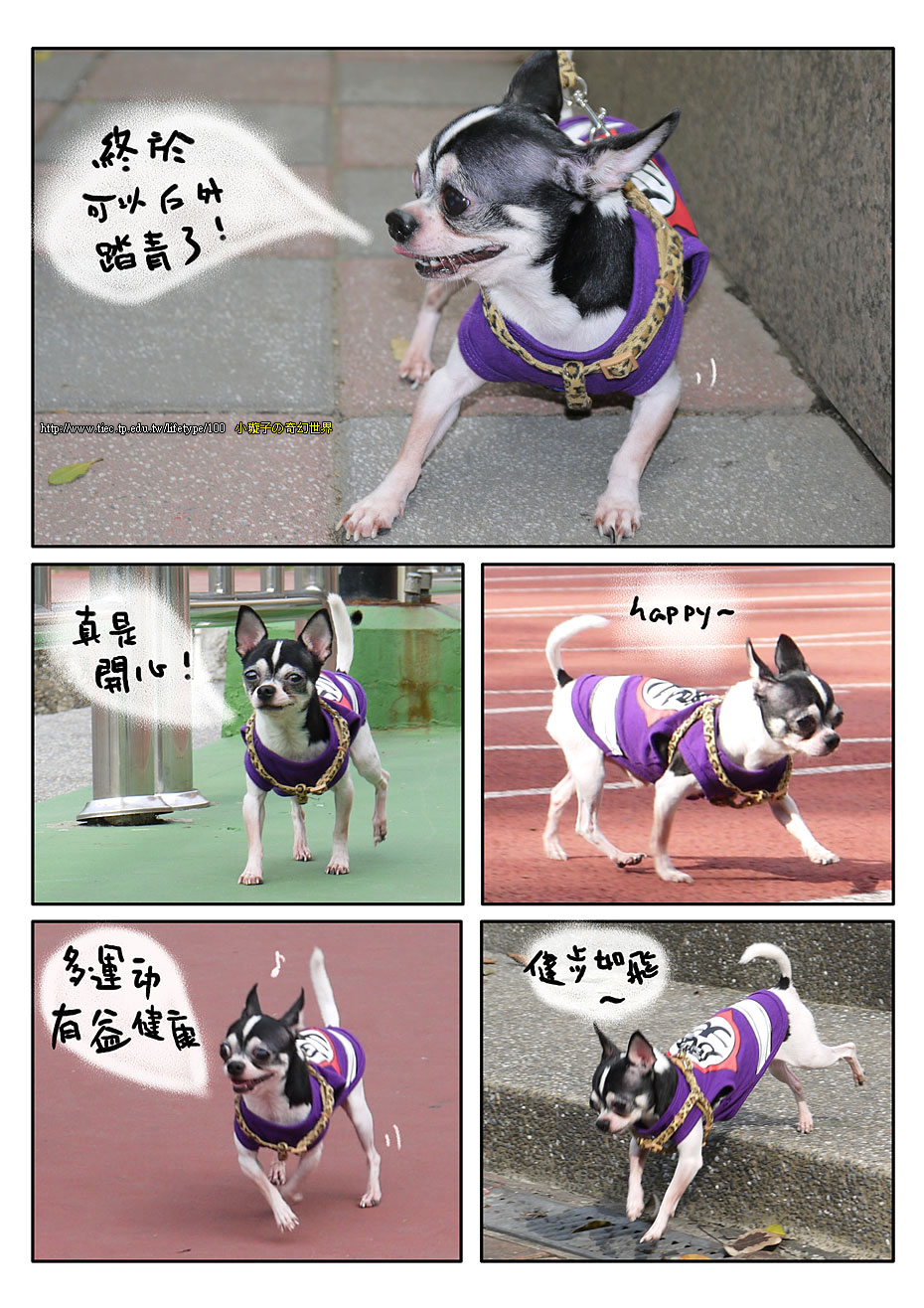 201012dog_4.jpg